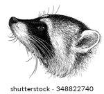 head of a raccoon   Shutterstock . vector #348822740