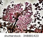 close up of blossom on a tree | Shutterstock . vector #348881423