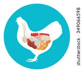 vector chicken anatomy.... | Shutterstock .eps vector #349066598