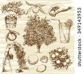 hand drawn orange fruit and... | Shutterstock .eps vector #349143953