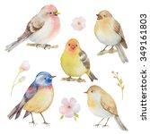 Bird Watercolor Set. Hand...