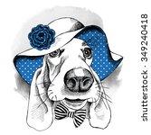 portrait of a dog basset hound... | Shutterstock .eps vector #349240418