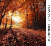 autumn colors forest at sunny... | Shutterstock . vector #349272089