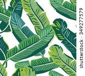 banana palm leaves on the white ... | Shutterstock .eps vector #349277579