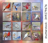 Songbird Collage On Multi...