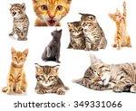 Stock photo set of cat isolated on white background 349331066
