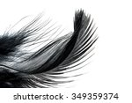 Close Up Of Black Feather...