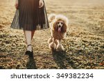 poodle on a walk with their... | Shutterstock . vector #349382234