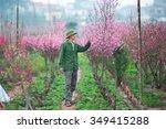 Hanoi  Vietnam  Feb 8  Farmers...