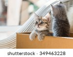 Stock photo close up of cute tabby kitten holding paper box in the moring 349463228