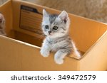 Stock photo close up of cute tabby kitten holding paper box in the moring 349472579