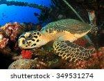 Hawksbill Sea Turtle On...