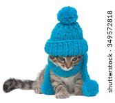 cat wearing a blue knitting hat ... | Shutterstock . vector #349572818