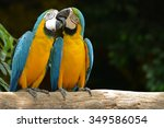 Two Parrot Yellow And Blue...