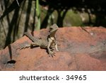 water dragon | Shutterstock . vector #34965