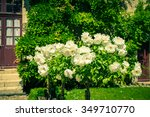 Stock photo bush of beautiful roses in a garden filtered shot 349710770