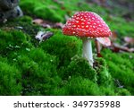 Fly Agaric Toadstool In Moss