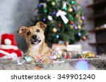 Small cute funny dog with garland on Christmas background - stock photo