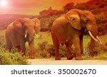 two elephant bulls walking... | Shutterstock . vector #350002670
