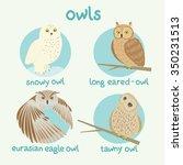 Vector Owls Set  Snowy Owl ...