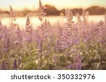 close up flowers at sunrise   Shutterstock . vector #350332976