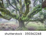 Ancient Laurel Forest In The...