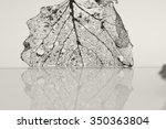 texture with rotten leaves with ... | Shutterstock . vector #350363804