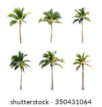 coconut trees on white... | Shutterstock . vector #350431064