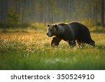 a close up shot of a wild big...   Shutterstock . vector #350524910
