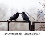Ravens Sitting On A Fence On A...