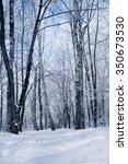 winter forest spruce | Shutterstock . vector #350673530