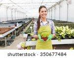 young woman gardening in... | Shutterstock . vector #350677484