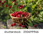 Cherry Fruit Basket  And ...