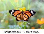 Orange Butterfly On Orange...