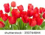 Fresh Red Tulip Flowers Border...