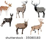 illustration with deer... | Shutterstock .eps vector #35080183