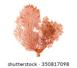 Red Gorgonian Or Red Sea Fan...