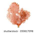 Red Gorgonian Or Red Sea Fan...