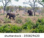 two african elephants | Shutterstock . vector #350829620