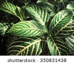 leaves with shadow | Shutterstock . vector #350831438