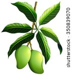 fresh mango on the branch...   Shutterstock .eps vector #350839070