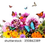 Stock photo beautiful wild flowers and flying butterflies on white background 350862389