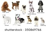 Different Breeds Of Dogs...