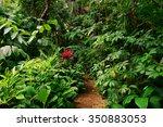 tropical garden  cairns ... | Shutterstock . vector #350883053