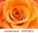 Very Nice Detail Of A Orange...