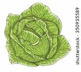 cabbage | Shutterstock .eps vector #350935589