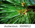 Wet Spruce. Element Of Design.