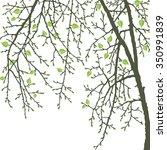 realistic vector spring tree...   Shutterstock .eps vector #350991839