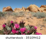 Beavertail Cactus In Valley Of...
