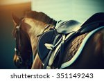 Stock photo saddle with stirrups on a back of a sport horse 351149243